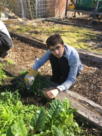 A student tending one of our garden beds.